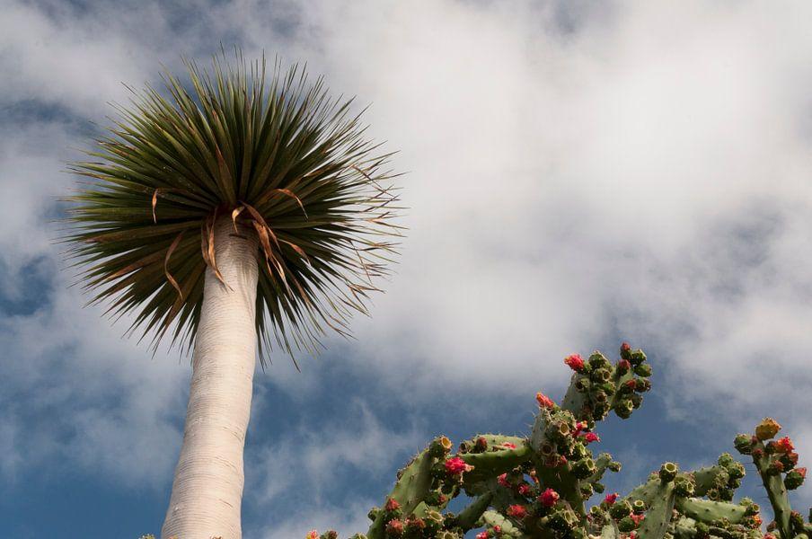 Bloeiende cactus en losstaande boom