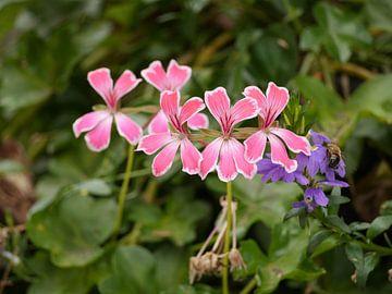 Rosa und violette Blumen von Floris Trapman