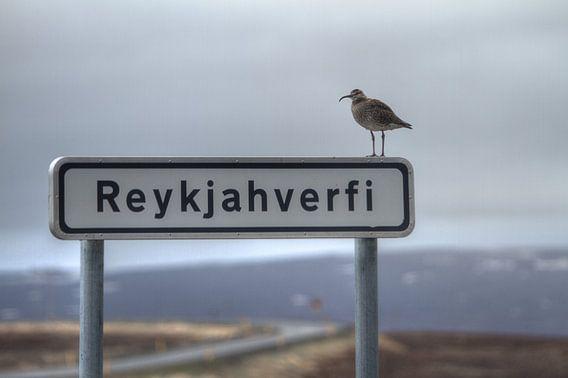 Reykjahverfi