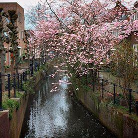 Rustiek Keizersgracht van Jan van der Knaap