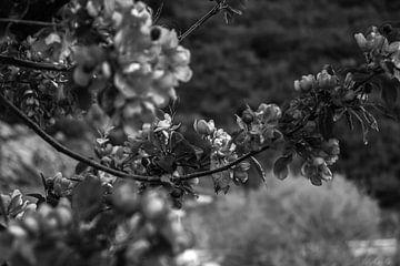 Blühend im Frühling von Oguz Özdemir