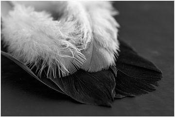 Weiße Federn, schwarze Federn von Hetwie van der Putten