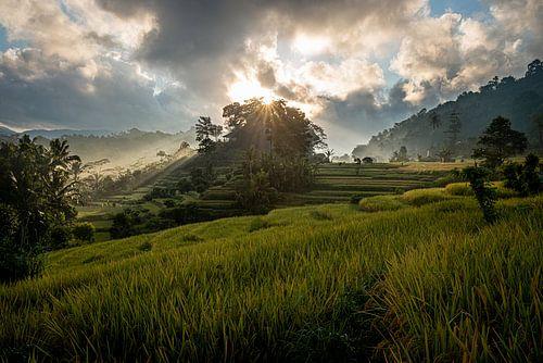 Zonsopkomst over de rijstvelden van Sidemen, Bali