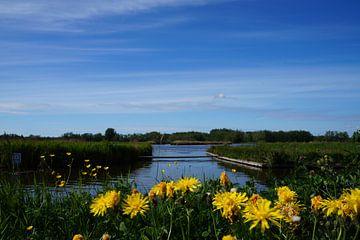 Niederländisches Naturwasser von Martine Overkamp-Hovenga