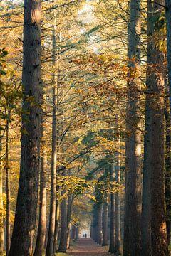 Herbst und Sonnenaufgang im Wald von Zeister in Zeist! von Peter Haastrecht, van