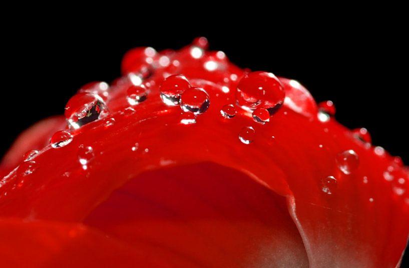 regendruppels... van Ettie van der Meulen-Vermaning