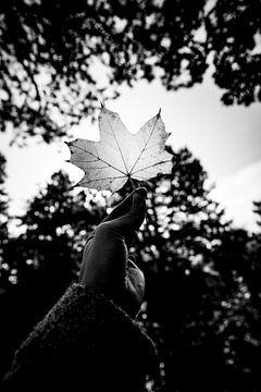 Herbstmagazin Schwarz-Weiß-Fotografie von Linsey Aandewiel-Marijnen