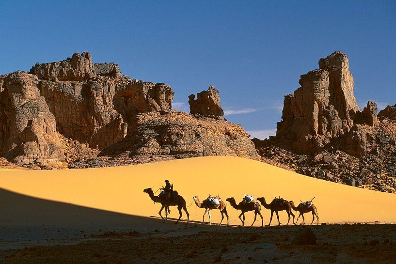 Désert du Sahara, caravane de chameaux et chamelier touareg sur Frans Lemmens