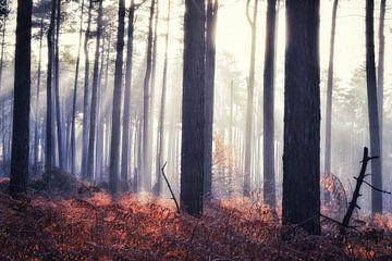 Klosterwald von Paul Vermeeren