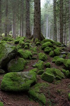 Mos rotsen van Wim Slootweg