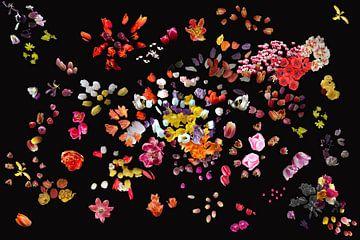 Projekt #RGBMitTulpe2016 von Susan Hol