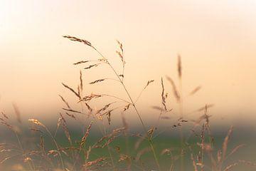 Grasses in aufgehender Sonne von Pascal Raymond Dorland
