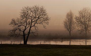 Nebliger Sonnenaufgang, Landschaft von Nynke Altenburg