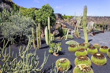 Verschillende soorten cactussen op het Canarische eiland Lanzarote van Reiner Conrad
