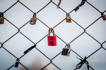 Lonely Red Lovelock sur Urban Photo Lab