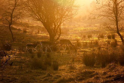 Herten in zonsondergang van Marjolijn Barten