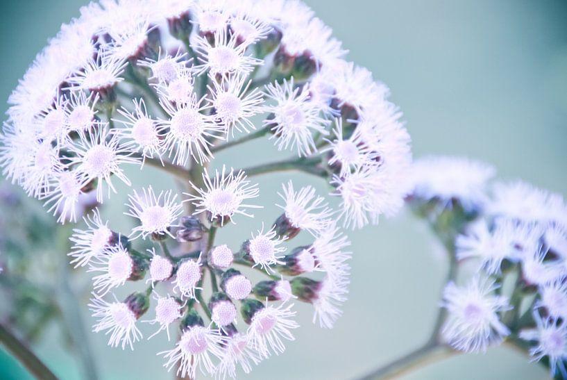 Purple Dotty bloem van Arja Schrijver Fotografie