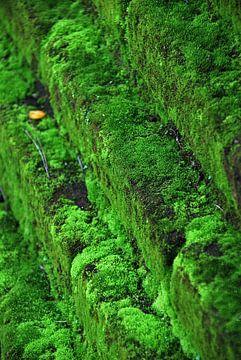 Grünes Moos von Homemade Photos