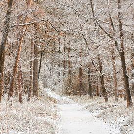 Winters pad door het bos van de Veluwe van Cor de Hamer
