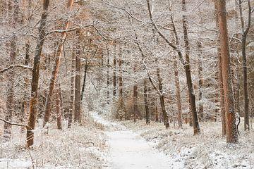 Winterweg durch den Wald der Veluwe von Cor de Hamer