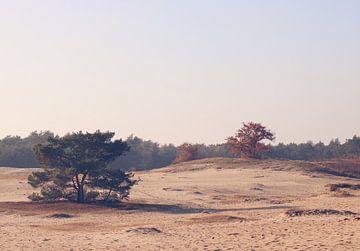 Veluwse zandvlakte van Cinthia Mulders