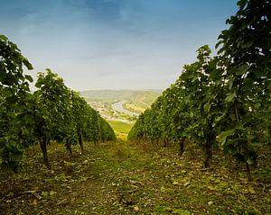 Wijngaarden in Sonneberg Duitsland de Moesel van