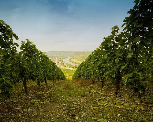 Wijngaarden in Sonneberg Duitsland de Moesel van noeky1980 photography