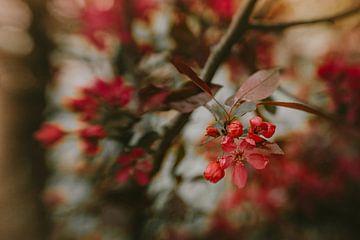 Elegant Spring van Hiske Boon