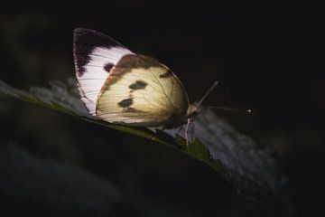 Butterfly on leave van Sandra H6 Fotografie