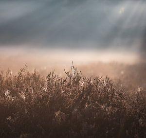 zonlicht over de heide van Tania Perneel