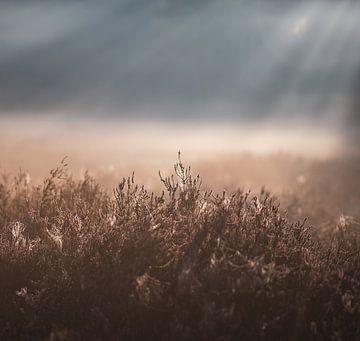 Sonnenlicht über der Heide von Tania Perneel