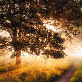 Het pad naar het eeuwige sprookje van Joris Pannemans - Loris Photography