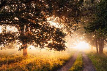 Het pad naar het eeuwige sprookje