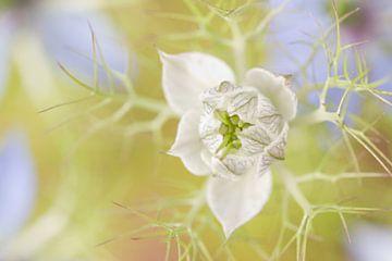 Persisches Juwel Romantisch Weiß von Dagmar Hijmans