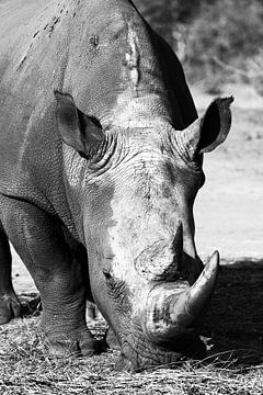 Namibisches Nashorn von Carmen de Bruijn