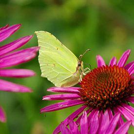 vlinder in de kasteeltuin van Kasteel Geldrop van tiny brok