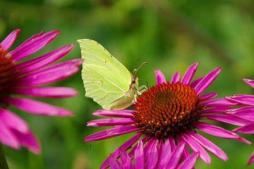 Schmetterling im Hinterhof von tiny brok