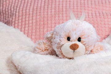 Teddybär liegt im Kissen von Thomas Heitz