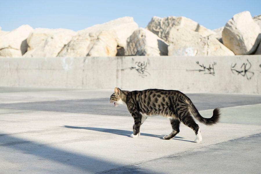 Kat in Cyprus