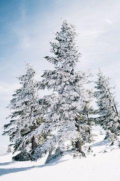 Schneebedeckte Bäume von Patrycja Polechonska