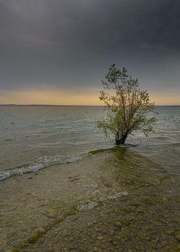 Lost tree van Patrick Herzberg