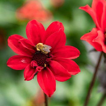 Bij bij de bloem von Floris van Woudenberg