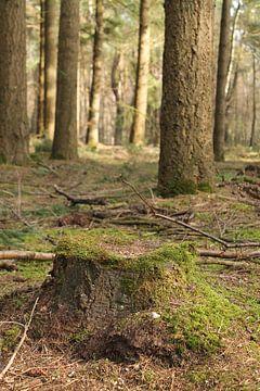 Mossig bos van Marit Visser
