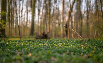 gelber Waldboden von Tania Perneel