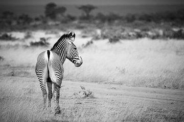 Grevy's Zebra von Van Renselaar Fotografie