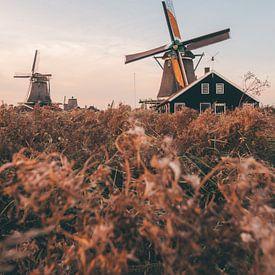 Typisch Nederlandse windmolens in Zaanse Schans op een zomerse avond tijdens het golden hour van Michiel Dros
