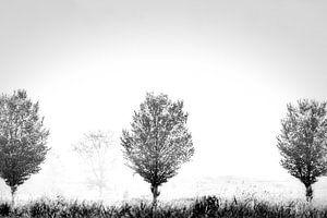 trees in the mist van Johan van der Linde