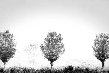 Schritte im Nebel von Johan van der Linde