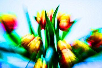 Tulip sur Annette Kempers