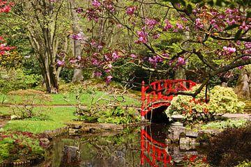 Rood bruggetje in Japanse Tuin van Wilma Overwijn